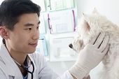 Veterinarian looking at dog in office
