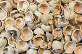 stock photo of cobnuts  - Hazelnut  - JPG