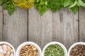 picture of bay leaf  - Colorful herbs and spices selection - JPG