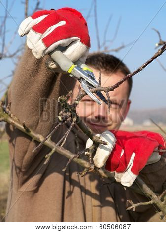 Young gardener pruning apple tree branches with pruners
