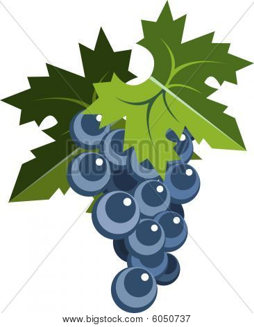 Grape bunch with leaves