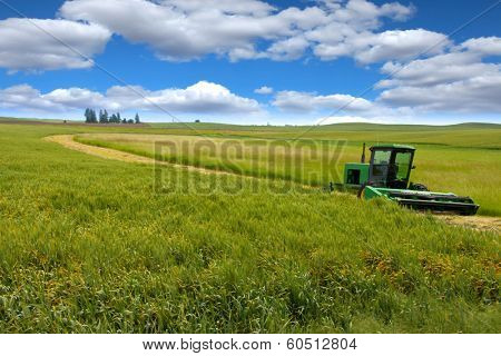 Tractor in the middle of wheat fields harvesting