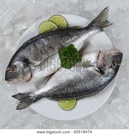 Two Giltheads Fish On A Plate
