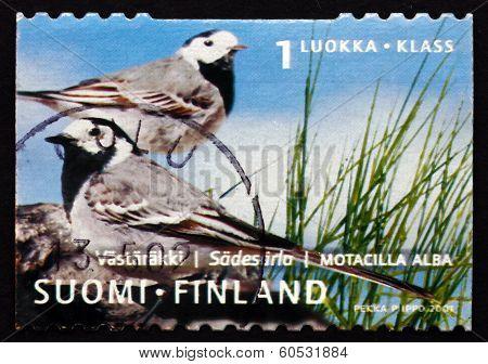Postage Stamp Finland 2001 White Wagtail, Passerine Bird
