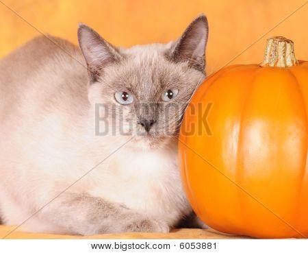 I love my pumpkin!