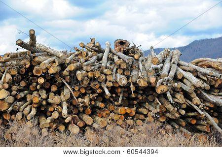 Log Stock Pile