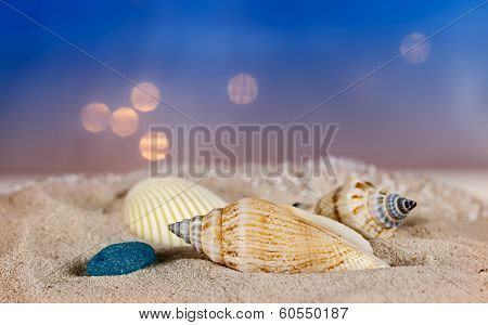 Seashells on a sand