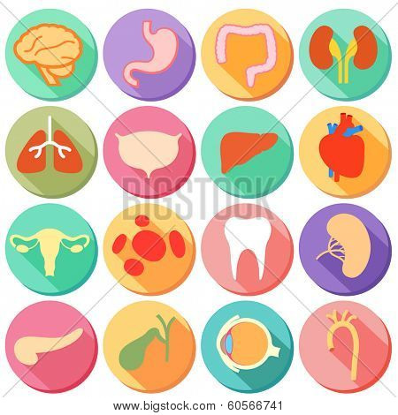 illustration of set of internal organ and body parts of human in flat style