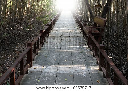 Passages In Forest Of Phetchaburi, Thailand