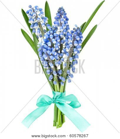 Bunch of  Springs flowers Muscari with ribbon bow Isolated on white background