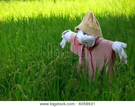 Scarecrow Ricefield