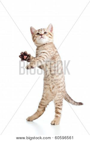 Funny Playful Cat Is Jumping. Isolated On White Background