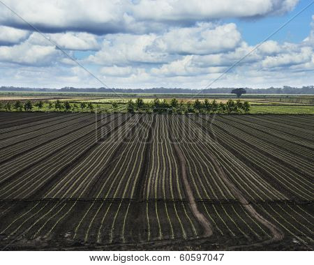 Freshly Sown Florida Fields Against A Sky