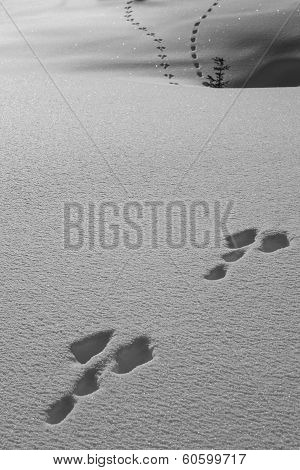 Animal Traces In The Snow