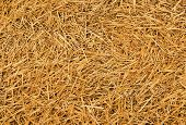 foto of dry grass  - close up on the straw - JPG