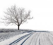 picture of snowy-road  - Winter white snowy scenery with road trail and tree - JPG