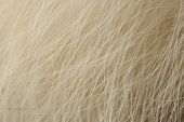 foto of arctic fox  - A macro shot of natural arctic fox fur - JPG