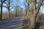 foto of street-walker  - Old Street in Brandenburg in the winter sun - JPG