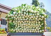 picture of truck farm  - Cabbage on the truck in Chiang Mai Thailand - JPG