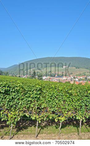 Sankt Martin,German Wine Route,Palatinate