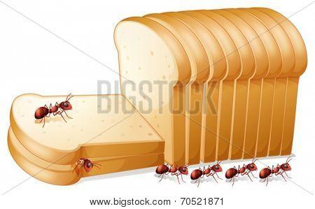 Illustration of ants on bread