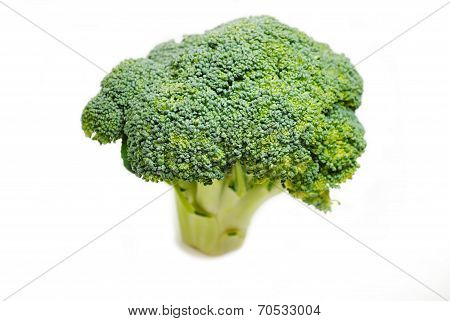 Raw Fresh Broccoli Bunch Over A White Background