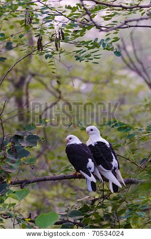 Pair Of Love Birds On The Branch Of A Tree.