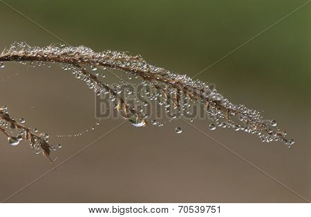 Close-up of twig with dew covered spiderweb