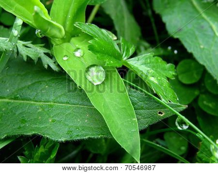 Drops And Leaf
