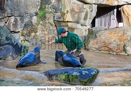 Fur Seals Feeding Show At A Zoo