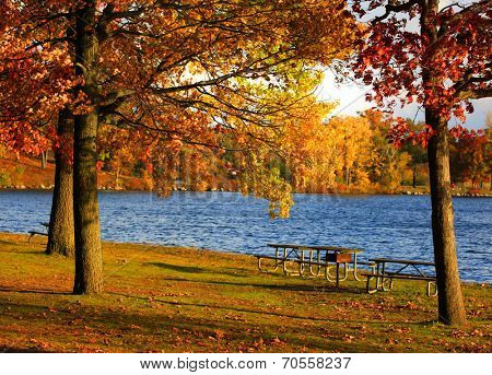 Picnic tables under the autumn trees near the lake
