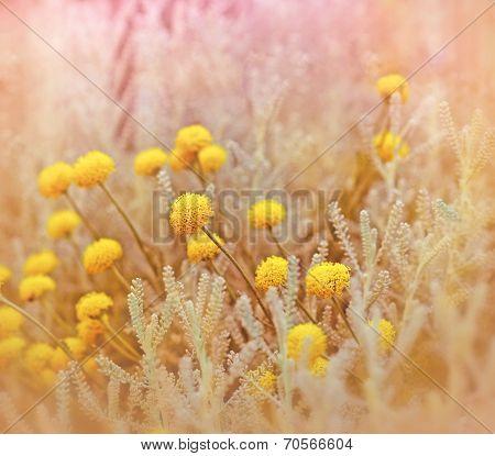 Yellow flowers in garden - meadow