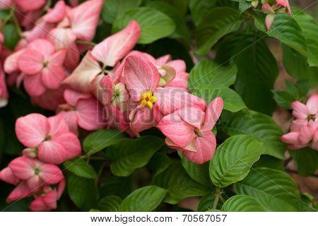 Dond Flower