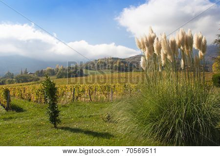 Pampas Grass In A Garden In The Alps Of France.