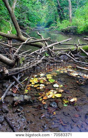 Kinnikinnick Creek Conservation Area Illinois