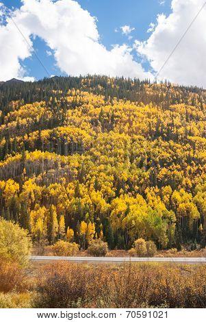 Colorado Aspen Vista