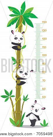 Meter Wall With Palm Tree And Three Funny Pandas
