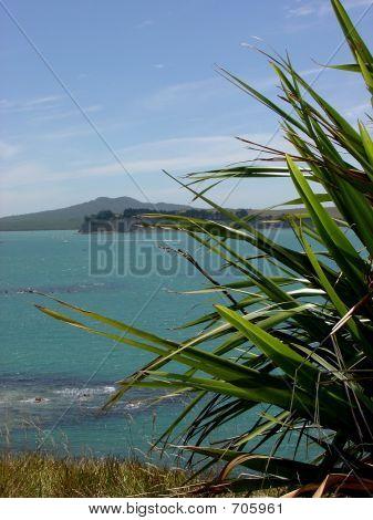 NZs Hauraki Gulf View