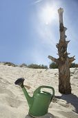 picture of water shortage  - Watering can by dead tree on sandy beach - JPG