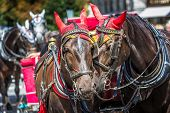 foto of carriage horse  - Horse Carriage waiting for tourists at the Old Square in Prague. ** Note: Soft Focus at 100%, best at smaller sizes - JPG