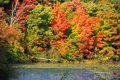 picture of kensington  - Bright autumn trees in Kensington metro park - JPG