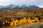 foto of snow capped mountains  - Snow capped mountains and last colors of Fall in Colorado - JPG