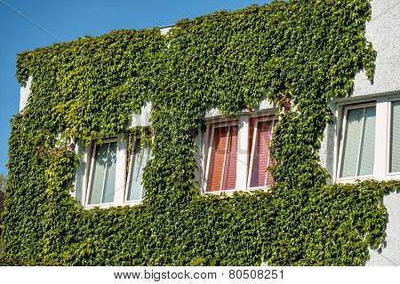 planted house facade, symbol of insulation, isolation, growth