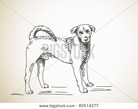 Sketch of dog. Hand drawn illustration. Isolated
