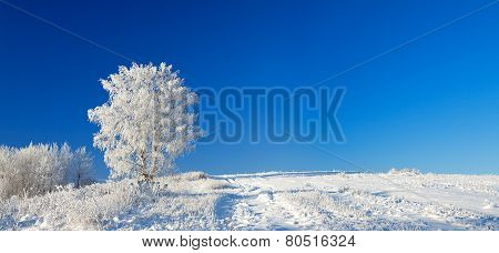 Winter Landscape A Panorama With The Blue Sky, A Field And The One  Tree