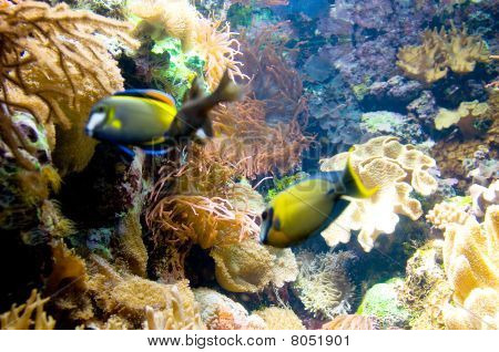 Tropical Fish Under Water On Bright Day