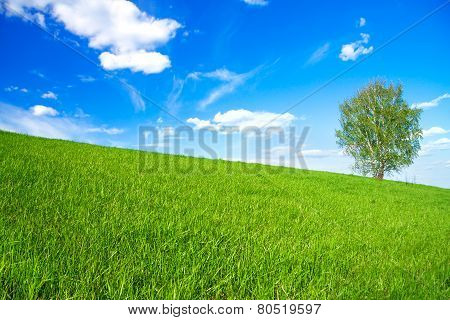 Spring Landscape With A One Tree In The Field