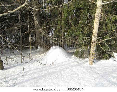 Anthill in winter