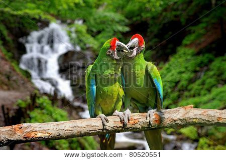 Parrot Against Tropical Waterfall Background