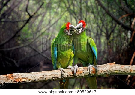 Parrot (severe Macaw) On Branch